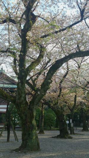 Yasukuni_14041_450x800_3