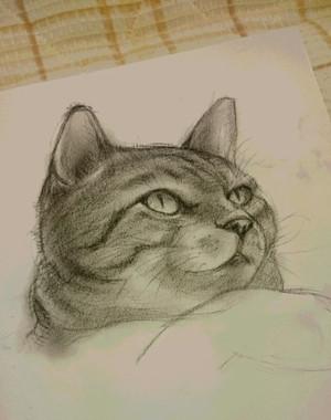 Cat150804